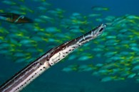 Dive sites farol Cabo Verde2