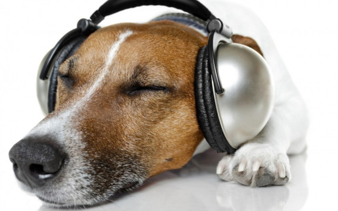Music helps dogs chill out, especially if it's reggae or soft rock