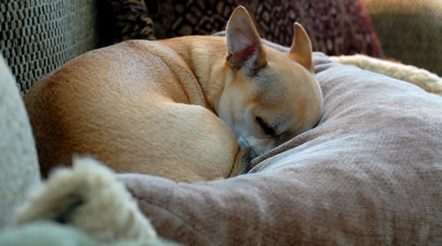 5 Signs of Pain That Owners Often Overlook – Are You Missing Them?