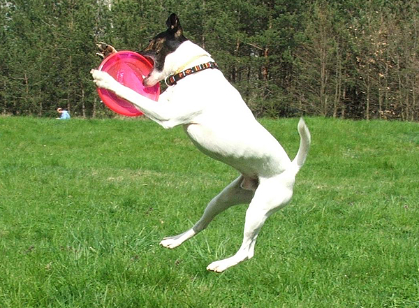 Summer Is Here … Lots Of Running, Jumping and Playing. If Your Dog Gets Injured After A Jump Or Rough Play It May Be An FCE
