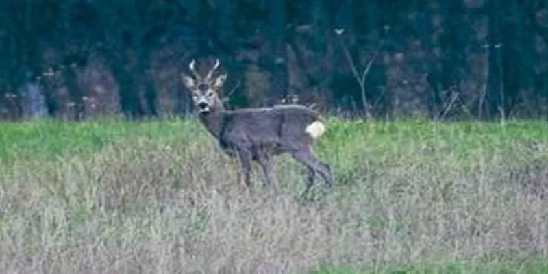 caccia montaione
