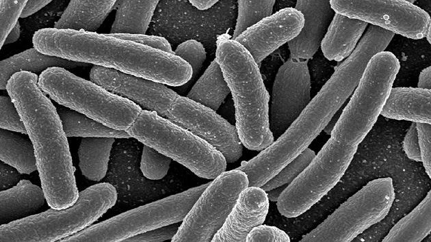 Crean un material 'vivo' y 'muerto' a la vez al cruzar bacterias con partículas de oro