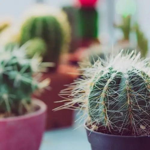 cactus ikea comment les choisir et