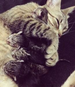 mama gata y sus gatitos