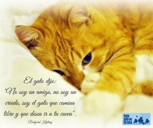 El Gato dijo- -No soy un amigo, no soy un criado. Soy el Gato que camina libre y que desea ir a tu Cueva- Rudyard Kipling