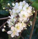 Esencias florales