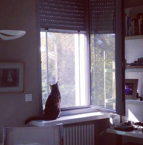 los gatos y las ventanas