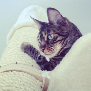 talleres sobre gatos