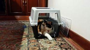gatos y transportin