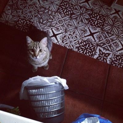 gatos que buscan en la basura