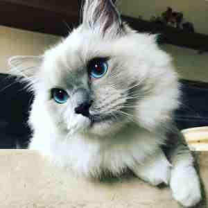 conexión gato