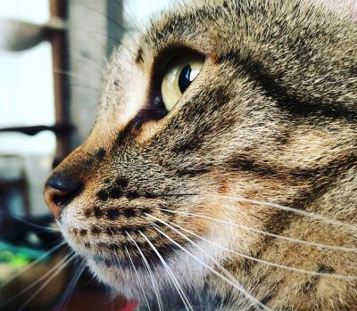 la esterilización de mi gata