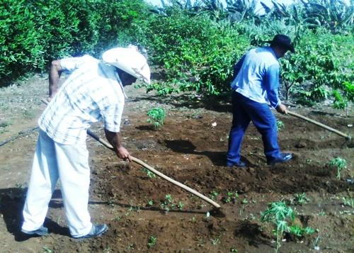 Manejo sostenible de suelos en Camagüey para proteger el entorno