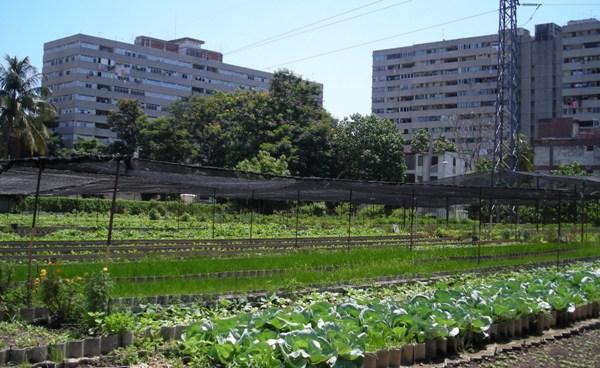 Camagüey, Minas y Jimaguayú, territorios destacados en Programa de Agricultura Urbana