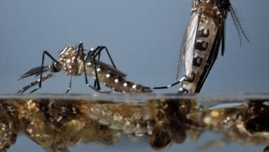 Photo of Dengue: ¿una nueva tecnología podría erradicarlo?
