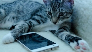 Photo of Crearon una app para traducir los maullidos de los gatos