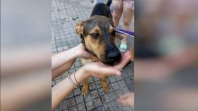 Photo of Rosario: allanaron una casa vacía para rescatar un perro
