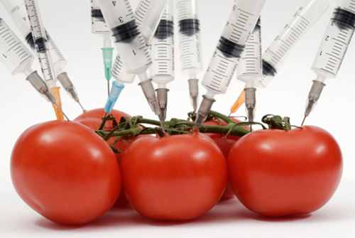 Cuando vas al súper mercado y observas las frutas y verduras, es muy difícil que te des cuenta qué producto es transgénico y cuál no lo es.