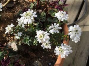 祈りは指導霊との対話・白い花
