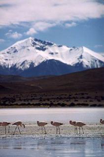 Cordillera occidental Bolivia