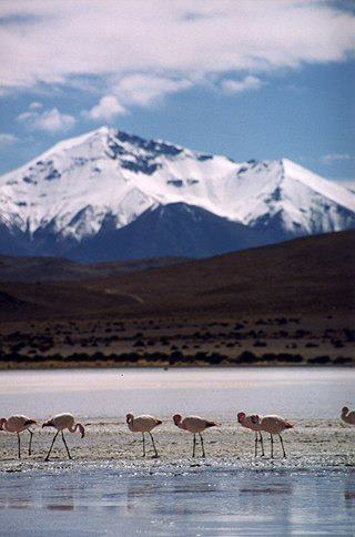 Cordillera occidental, Bolivia