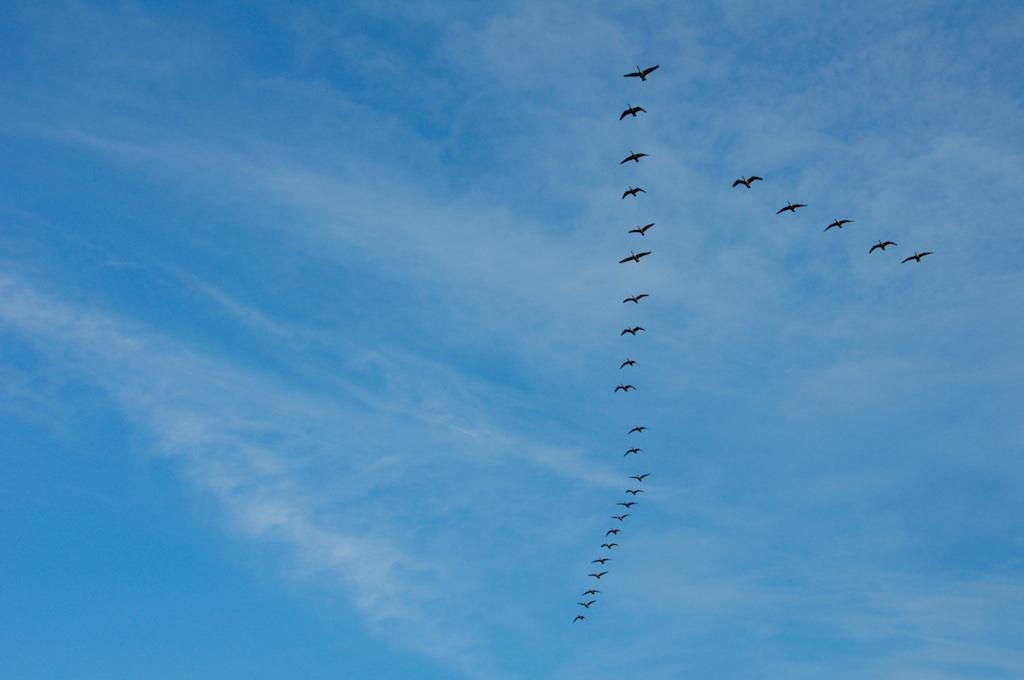 Trekvogels