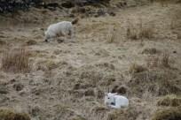 Hiking Schotland 2391
