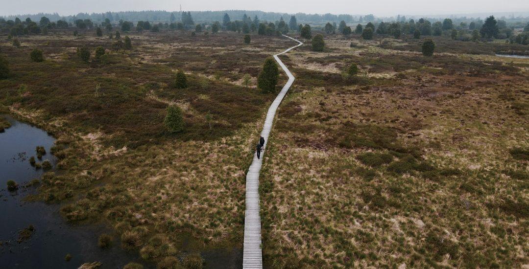 Königliches Torfmoor