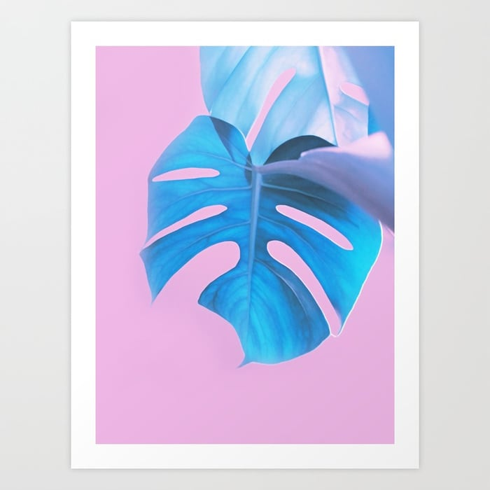 Light Blue Monstera