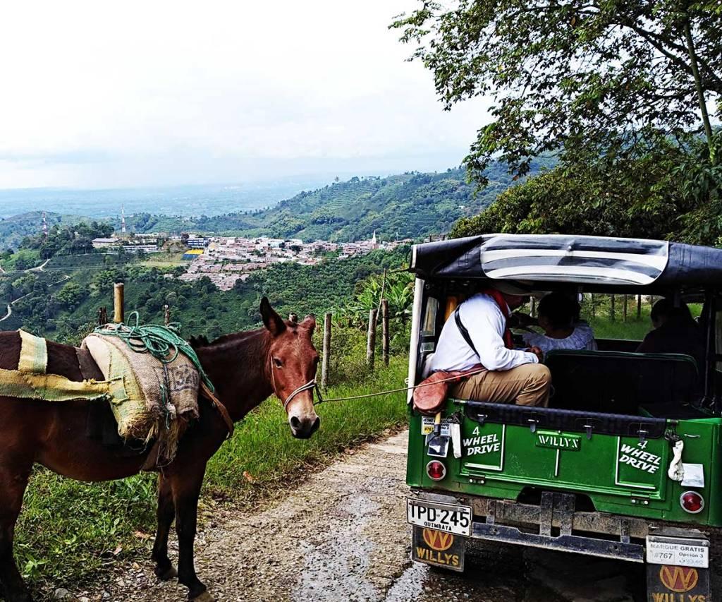 Buenavista, mirador del quindío, Caficultores,agricultores, Café Las Margaritas Especial Tipo Exportación, Vendedores de Café Colombiano, café origen