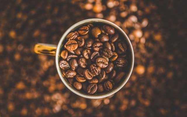 コーヒ豆の種類