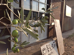 オリーブの樹を買ってきました(^^)