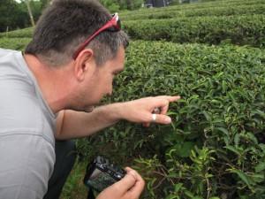 En busca de la formosana paoli
