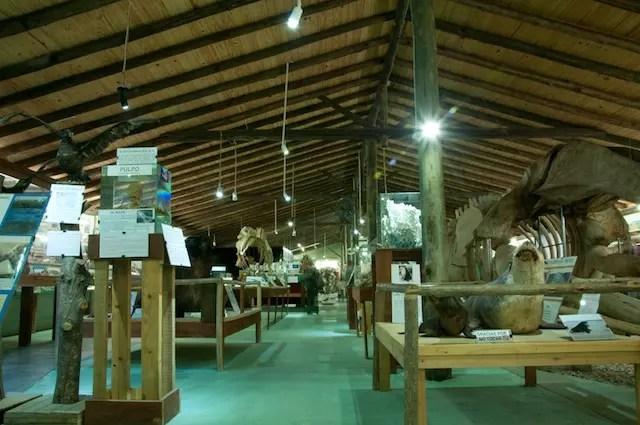 MUSEO DEL MAR Entrada (1)