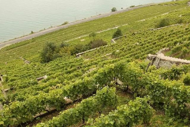 Roteiro vinhedos Lavaux Suica (4)