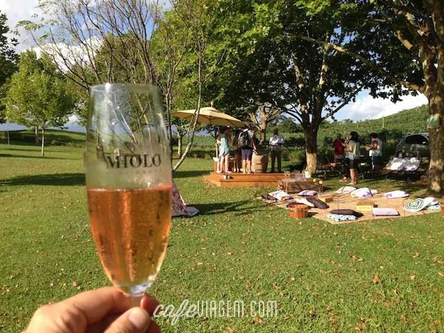 Wine Garden Miolo (18)