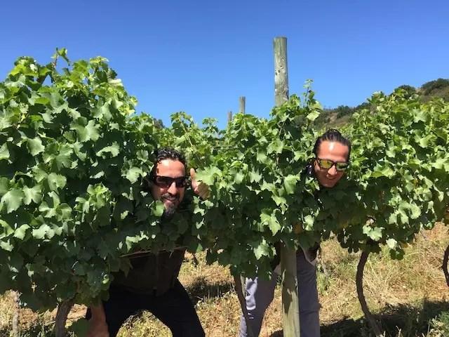 Roteiro Vinhos Chile 4