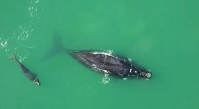 Rota da Baleia Franca em Santa Catarina