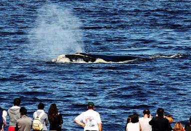 baleias no Uruguai