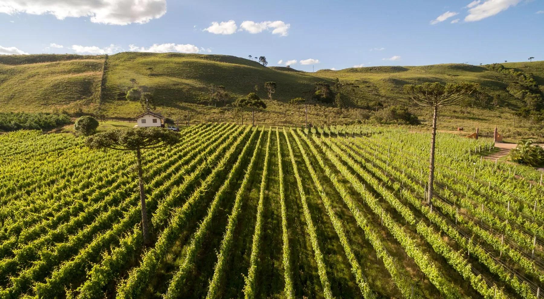 roteiro de vinho em Santa Catarina