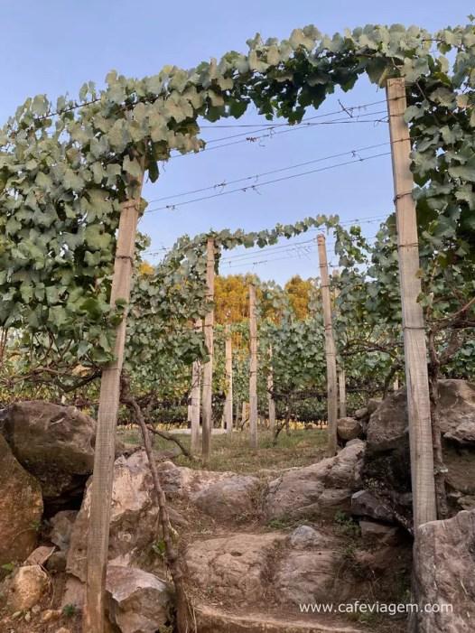 vinhos Orgalindo Bettu 16