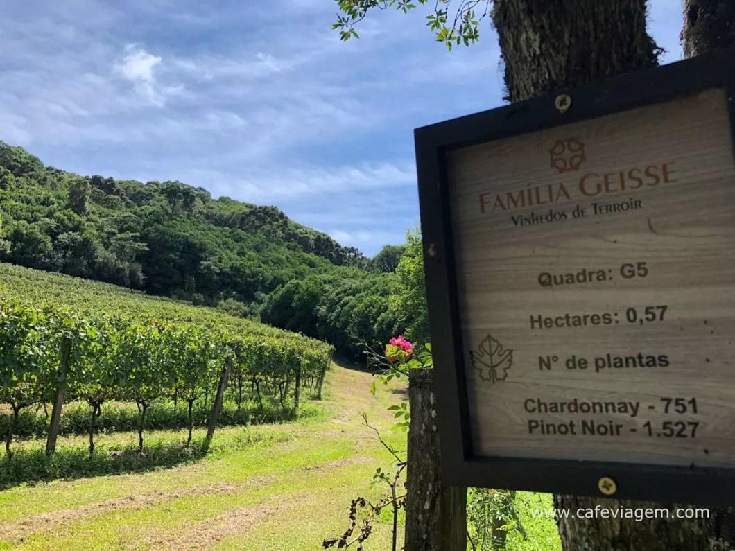 vinícolas da serra gaúcha imperdíveis