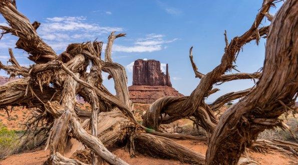 albero-e-monolite