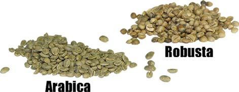 arabica robusta