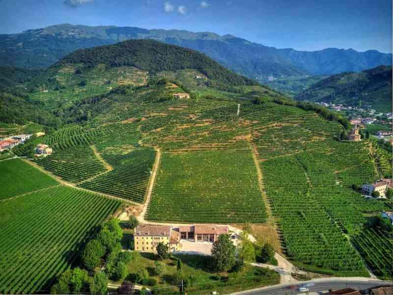 vigne prosecco