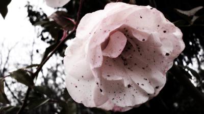 three-rivers-deep_dirty-flower