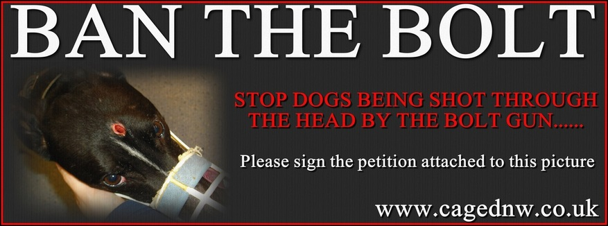 Ban The Bolt Gun Used To Kill Greyhounds CAGED NW