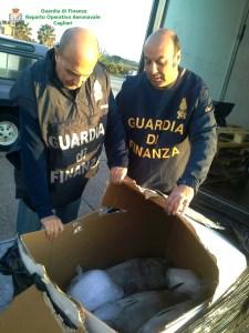 Cagliari. Le fiamme gialle sequestrano 250 kg di tonno rosso