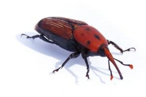 Lotta insetti, oltre sei milioni stanziati dalla Regione
