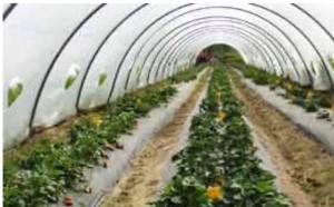 """Agricoltura e pesca, assessore Murgia: """"Aiuti concreti contro la crisi"""""""
